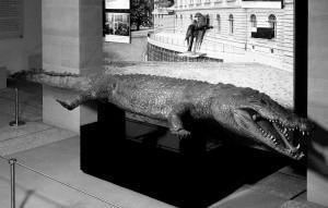naturmuseum1