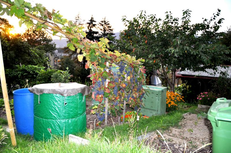 Familiengarten Ruckhalde Reben