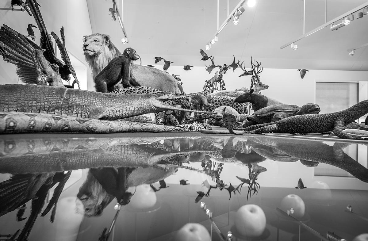 St. Gallen, Schweiz, 4. Oktober 2016 - Naturmuseum, Neubau, Ausstellung Macher Johannes Stieger fuehrt durch die neuen Raeume.